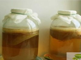 Чайный гриб — антибиотик в банке! Лечение без химии
